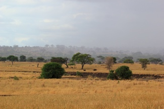 Rains rolling into Tarangire National Park, Wild Nature Institute